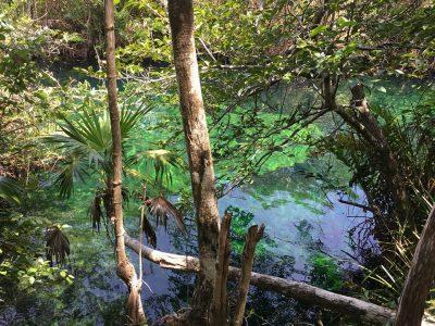 Cenote-Tulum-7.jpg