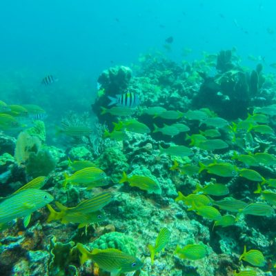 Isla Mujeres Kay (1)