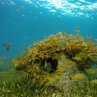 Isla Mujeres Kay (12)