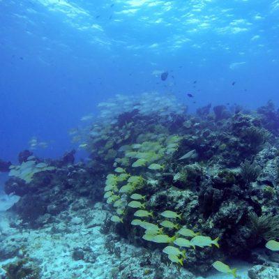 Isla Mujeres Kay (13)