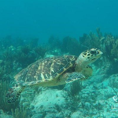 Isla MujeresTortugas y temp (4)