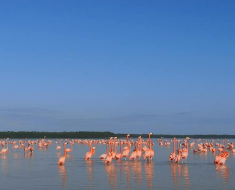 LOT OF FLAMINGOS IN CELESTUIN