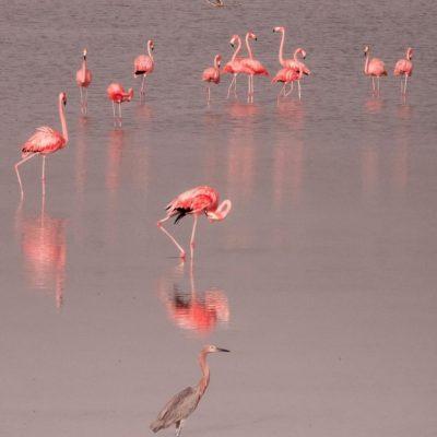 pink lagoon merida 5